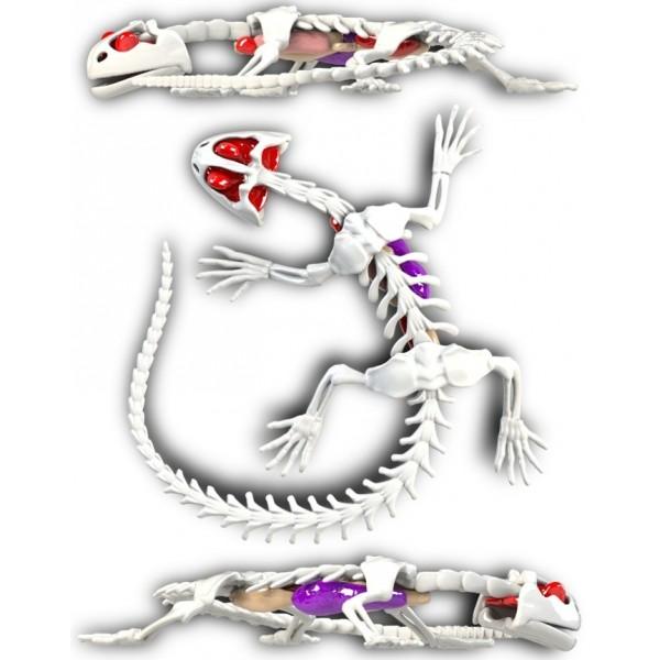 "Развивающий набор Slimy Lab ""Анатомия животных - Саламандра"" 38071"